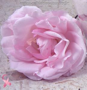 Rose de l'espoir