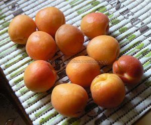 Mousse aux abricots vanillés etape1