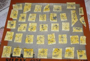 Mini-feuilletés aux graines de pavot etape4